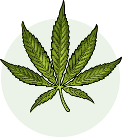 Oklahoma Cannabis Standard